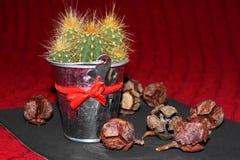 Kaktusa i jałowa rożki Obrazy Royalty Free