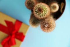 Kaktusa i prezenta pudełko widok od wierzchołka Zdjęcia Royalty Free
