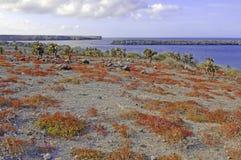 Kaktusa i rewolucjonistki ziemi pokrywa, Galapagos wyspy zdjęcie royalty free