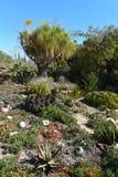 Kaktusa i sukulentu ogród obraz stock