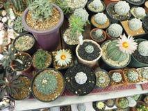 Kaktusa i sukulentu stół Zdjęcia Stock