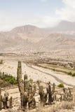 Kaktusa krajobraz Zdjęcia Royalty Free