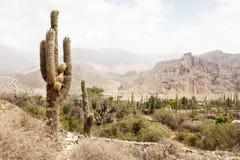Kaktusa krajobraz Zdjęcie Stock