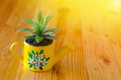 Kaktusa model Zdjęcia Royalty Free