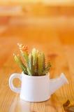 Kaktusa model Zdjęcia Stock