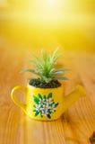 Kaktusa model Obraz Stock
