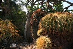 Kaktusa ogród Zdjęcia Royalty Free