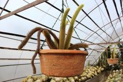 Kaktusa ogród przy Kalimpong w Darjeeling okręgu, India Obrazy Royalty Free