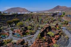 Kaktusa ogr?d w Guatiza, Lanzarote zdjęcie stock