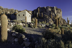 kaktusa pustynna giganta sól Zdjęcie Royalty Free