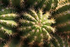 kaktusa up zamknięty Zdjęcia Stock
