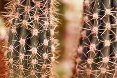 Kaktusa zakończenie strzelający z makro- obiektywem Zdjęcia Royalty Free
