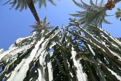 kaktusa zbliżenie uwarunkowywać naturalnego Zdjęcie Royalty Free