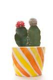 Kaktusanlagen Lizenzfreie Stockfotografie