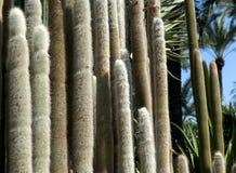 Kaktusanlagen Stockbild