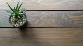 Kaktusbakgrund Royaltyfri Bild