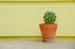 Kaktusbakgrund och dekorerat Arkivbilder