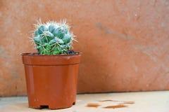 Kaktusbakgrund och dekorerat Arkivbild
