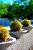 Kaktusbauernhof Stockfoto