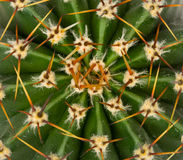 Kaktusbeschaffenheit Stockfotos