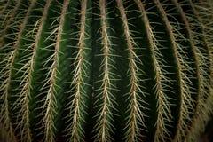 Kaktusblomma i en trädgård Fotografering för Bildbyråer