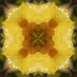 kaktusblommakaleidoscope Arkivfoton