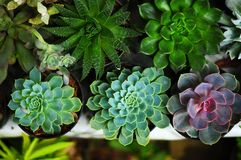 Kaktusblomman är alltid en favorit- dekorativ växt fotografering för bildbyråer