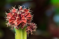 Kaktusblommaträd arkivbild