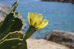 Kaktusblume auf dem felsigen Ufer lizenzfreies stockbild