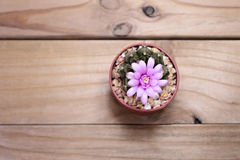 Kaktusblume auf Draufsicht des Hintergrundes Lizenzfreies Stockbild