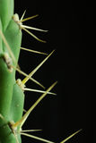 kaktusclose Royaltyfri Bild