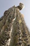 kaktuscloseup Royaltyfria Bilder