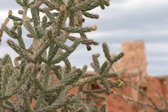 Kaktuscloseup med beskickning i bakgrund, Abo Pueblo som är ny - Mexiko Royaltyfria Foton