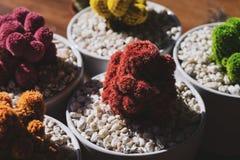 Kaktuscoleur Royaltyfria Bilder
