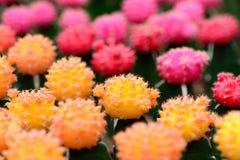 Kaktusdal Royaltyfria Bilder