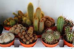 kaktusen planterar litet Arkivfoton