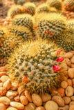 Kaktusfält Arkivfoton