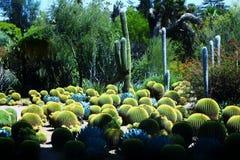 Kaktusfält Royaltyfri Foto