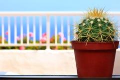 kaktusfönsterbräda Royaltyfri Fotografi