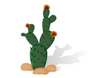 Kaktusfeige Stockbild