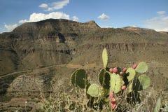 Kaktusfeige-Kaktus und Sandstein-Berg - Arizona Stockbilder