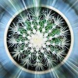 Kaktusfeige lokalisiert auf wei?em Hintergrund lizenzfreie stockbilder