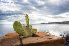 Kaktusfeigen mit Hintergrund Sizilien Aci Castello Lizenzfreies Stockbild