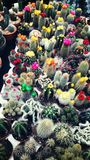 Kaktusgärten Lizenzfreies Stockbild