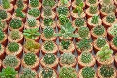 Kaktusgarten Stockbild