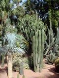 Kaktusgarten Lizenzfreies Stockbild