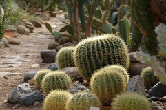 Kaktusgarten lizenzfreie stockbilder