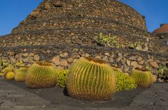 Kaktusgarten in Guatiza-Dorf, Lanzarote, Kanarische Inseln, Spanien stockbilder