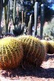 Kaktusgarten in Marrakesch Lizenzfreie Stockfotografie
