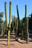 Kaktusgarten in Marrakesch Lizenzfreie Stockbilder